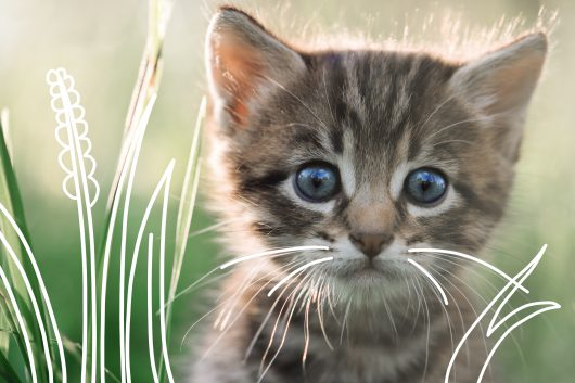 Vaccinating kittens - a kitten amongst the grass