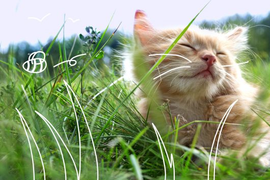 Microchipping your cat - a cat amongst the grass