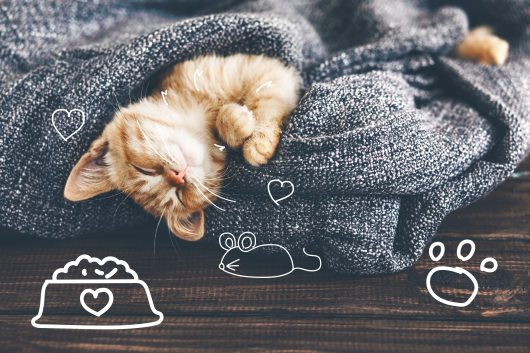 Cat fleas - A ginger kitten lays cosily on a grey blanket