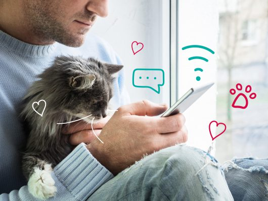 Worm control in cats. A cat sits with a man on his mobile phone.