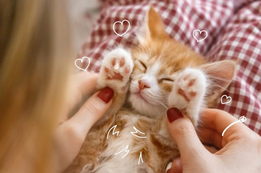 Cats and furballs - A cute kitten asleep with her paws up - Cats and hairballs