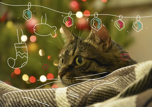 Cat lying on a background of colored lights, bokeh. Cat peeking out from behind the checkered plaid.
