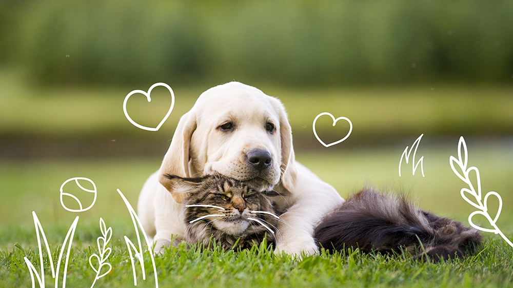 Pet ticks - a dogs and a cat outdoors together - removing a tick