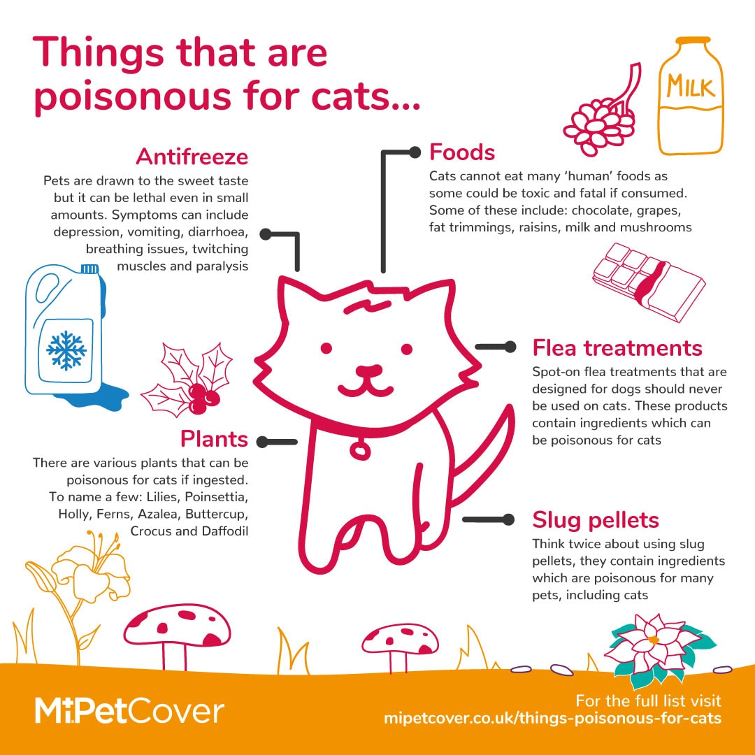 Things that are poisonous for cats infographic