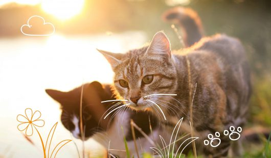 Things that are poisonous for cats - Two cats outdoors