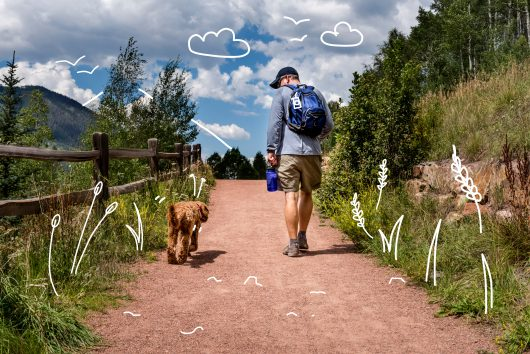 Labradoodle insurance - a Labradoodle out for a nice walk in the mountains