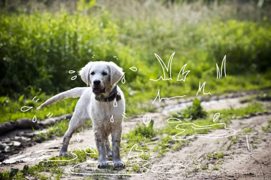 Why do dogs wag their tails? A muddy dog outdoors.