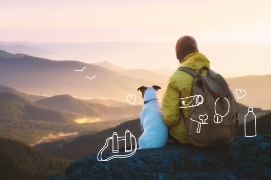 Jack Russell Terrier and a man admire the view from the mountain top