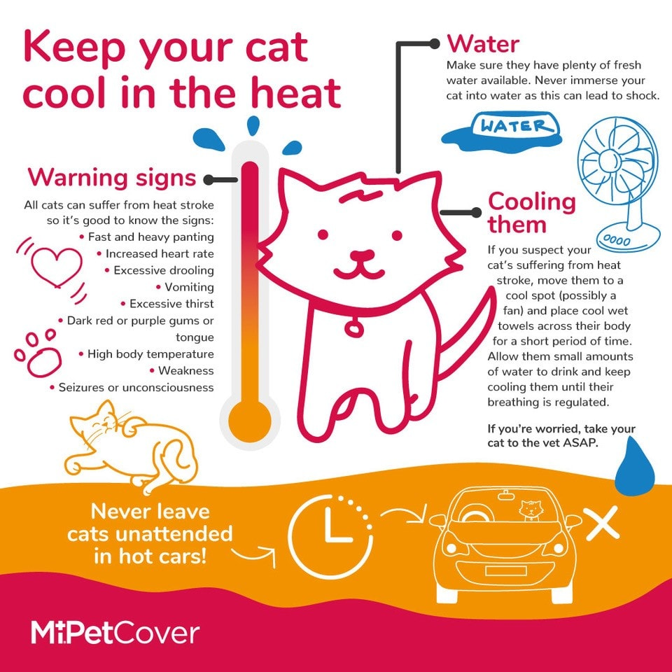 How to keep your cat cool infographic