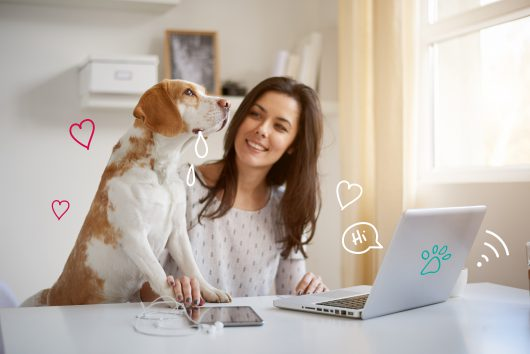 Dog First Aid, Pet First Aid. A dog reads about First aid at a laptop