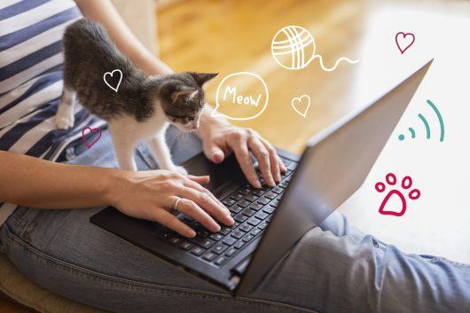 Pet First Aid - a kitten at a laptop