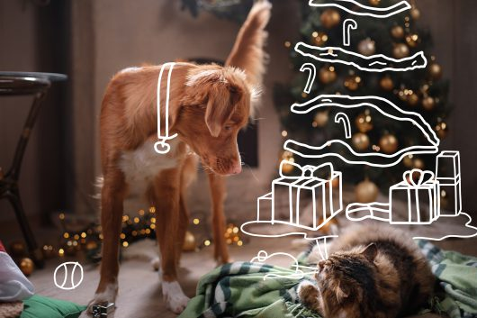Nova Scotia Duck Tolling Retriever dog and fluffy cat in a room with a fireplace. Yappy Christmas. Christmas with pets.