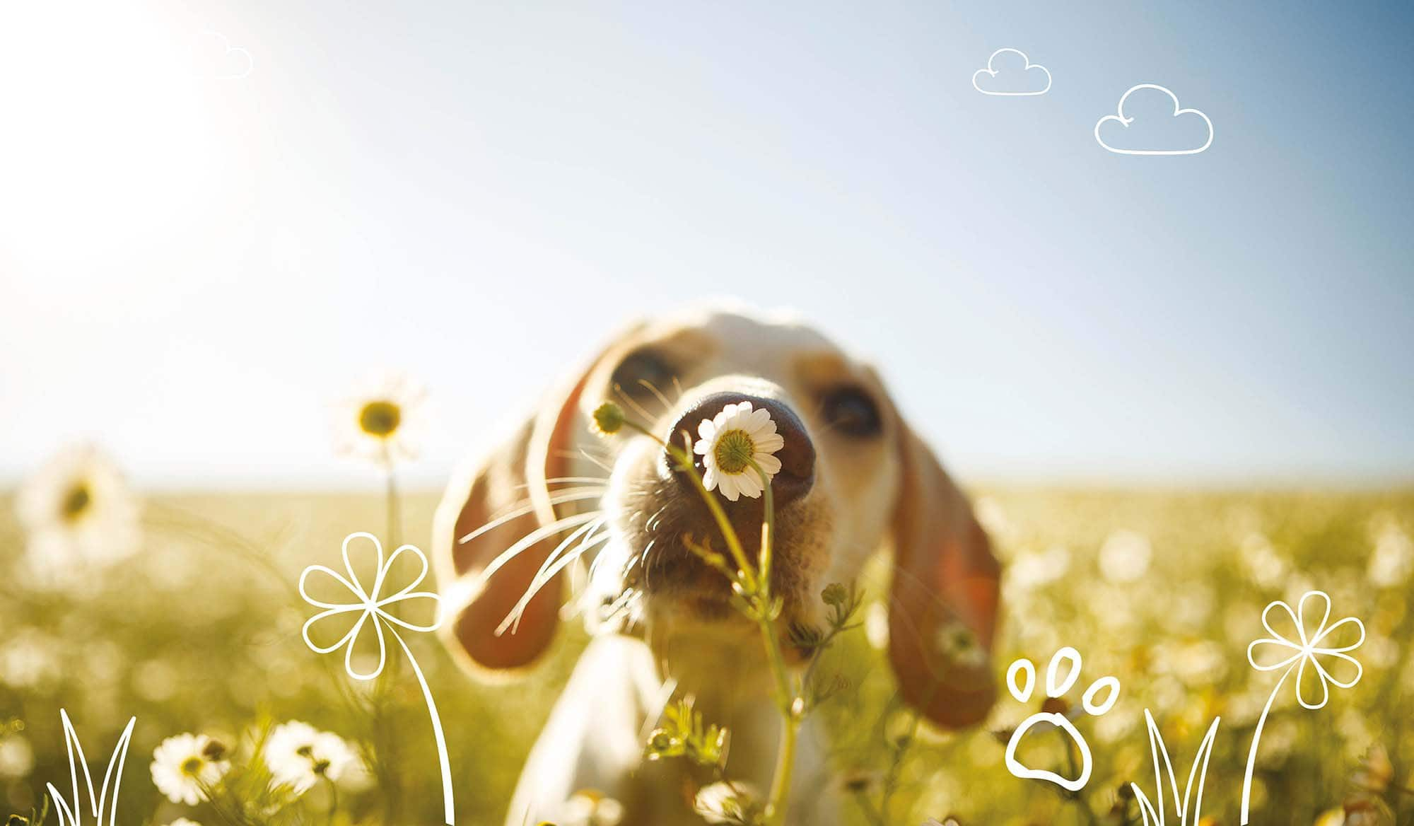 Puppy insurance from MiPet Cover