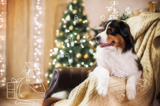 Christmas doggy gift guide 2019. A happy dog at Christmas.