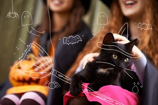 Cats and Halloween - A black cat sits with some girls and a pumpkin