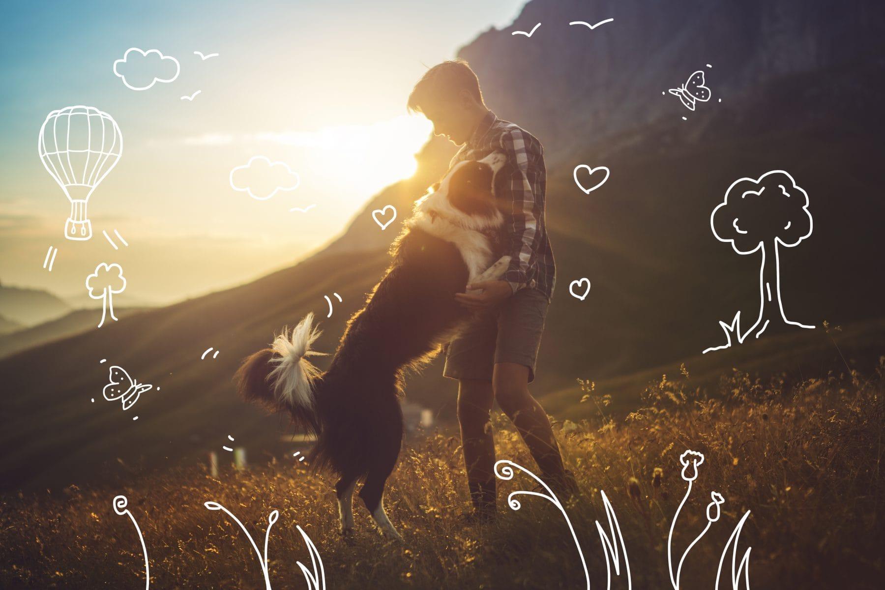 Border collies - pet insurance, dog insurance, Border Collie Insurance