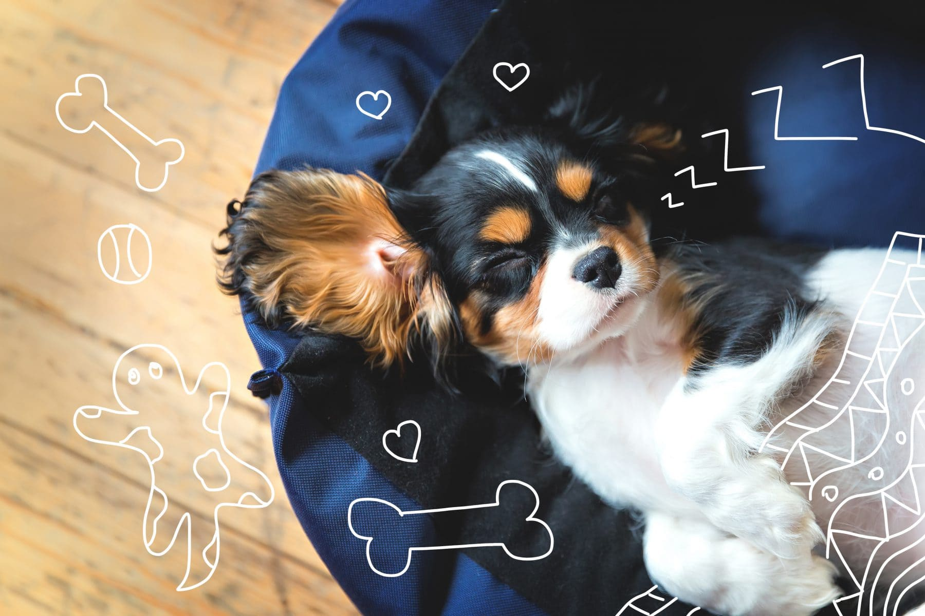 A puppy sleeps. Puppies sleeping through the night.