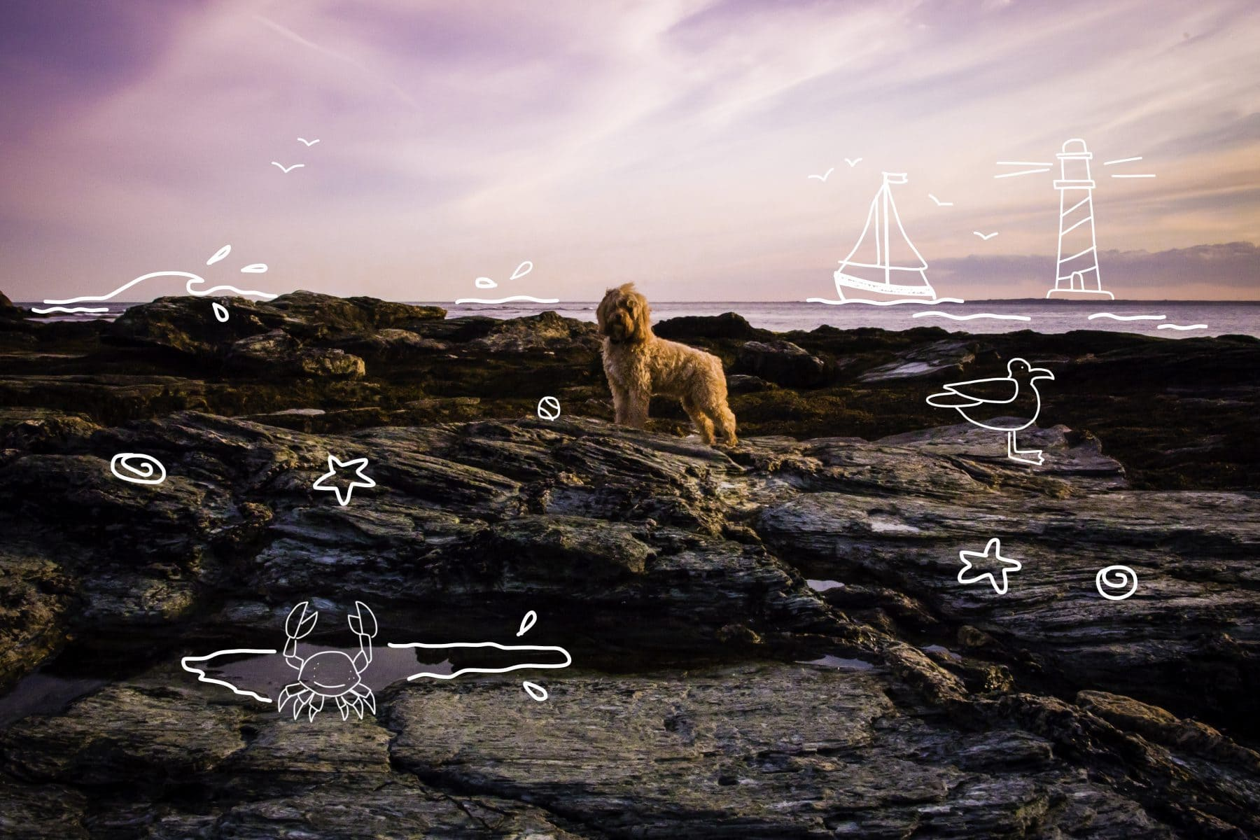 A dog enjoys an evening at the beach! How to ease your dog out of lockdown.