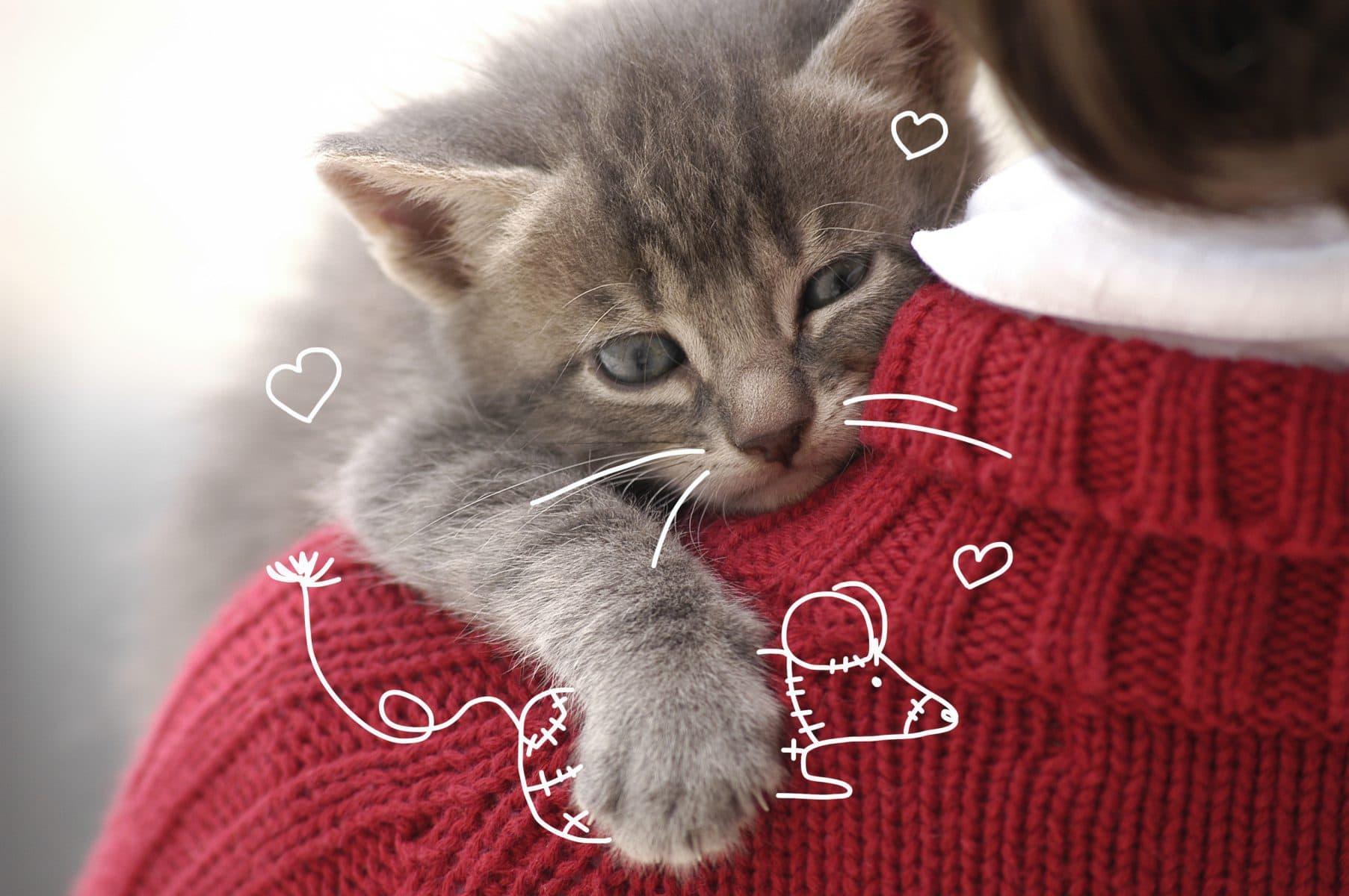 kitten insurance -Welcoming you new kitten to the family