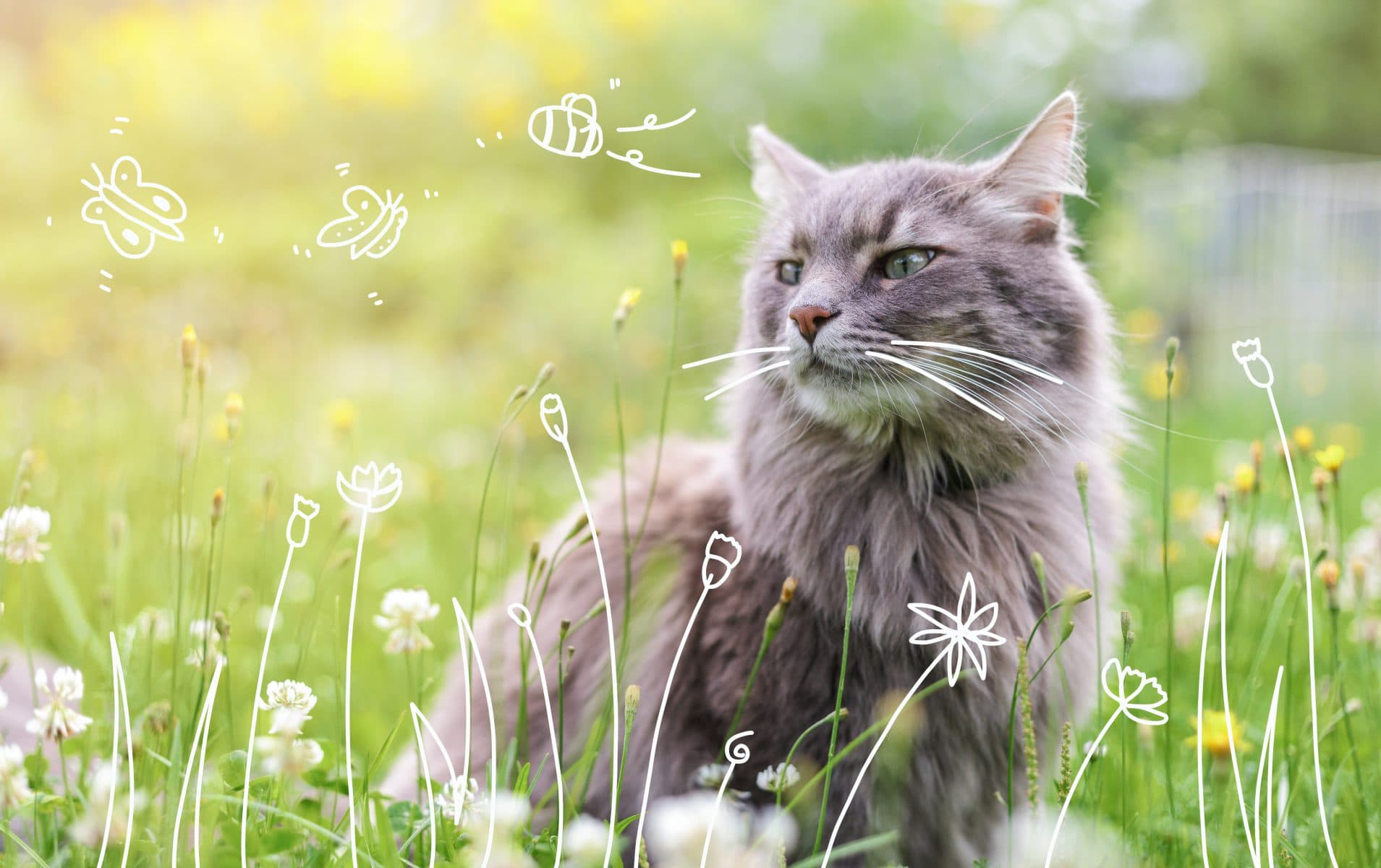 A Cat outdoors. cat diets