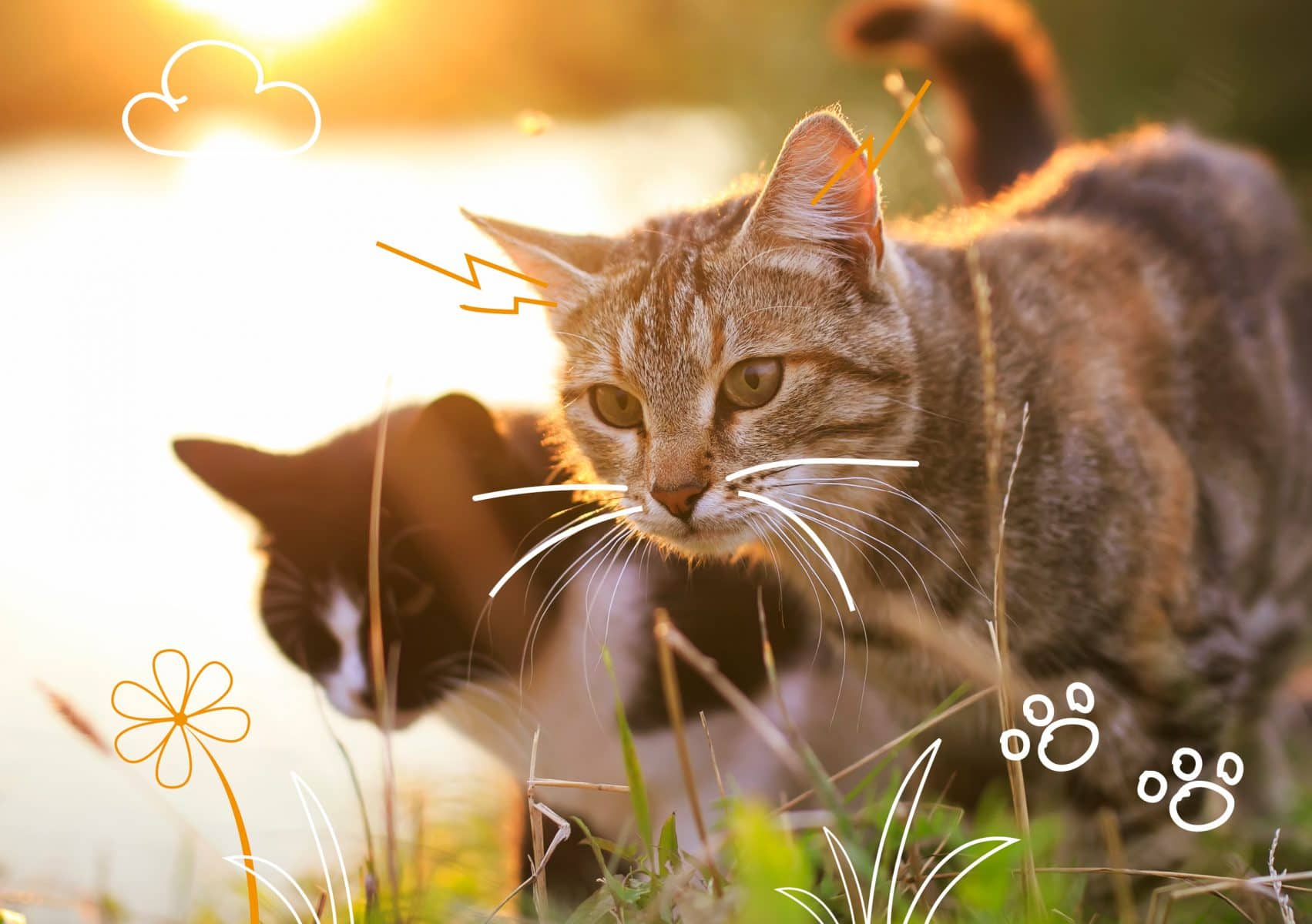 Kidney disease in cats - two cats outdoors