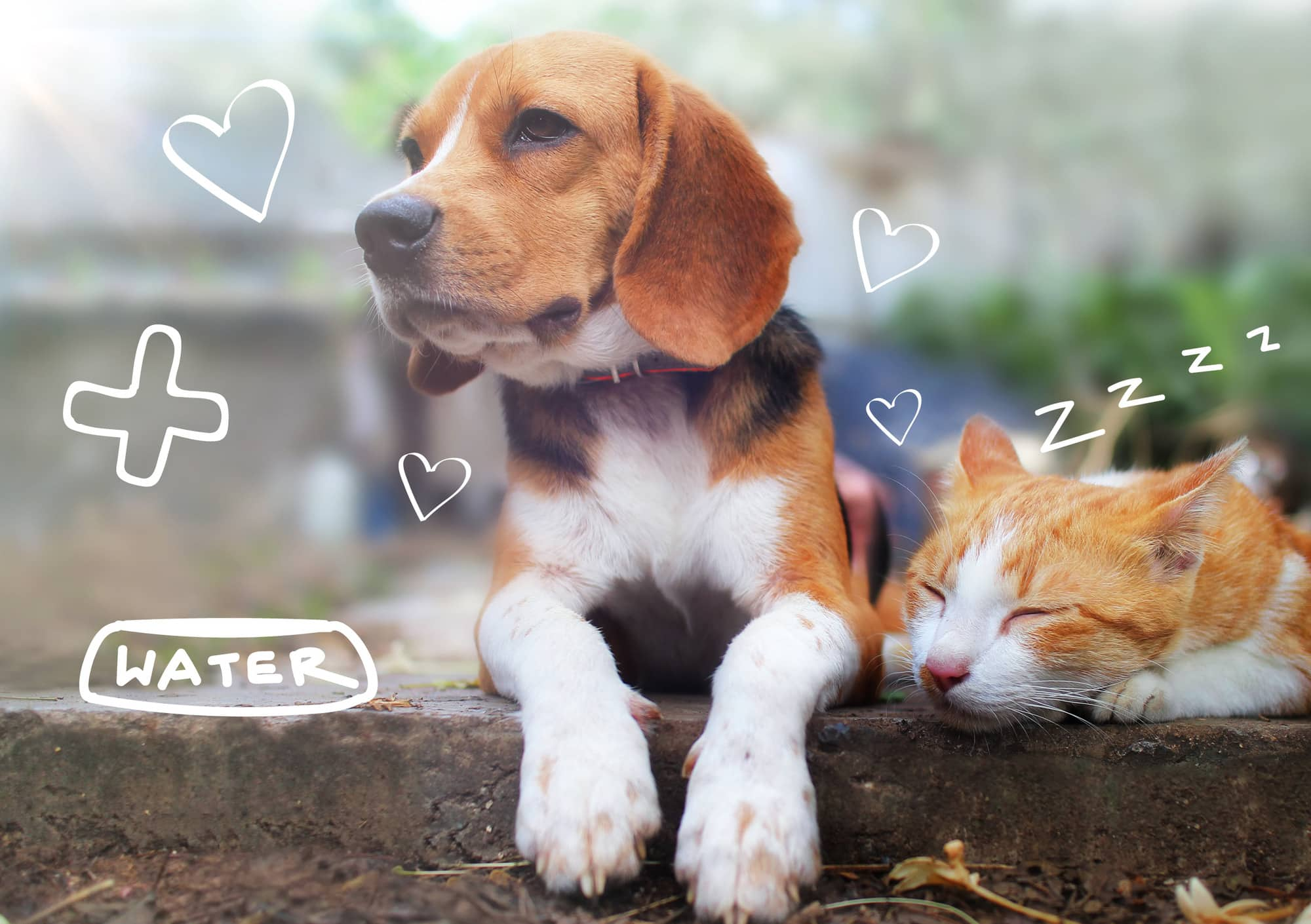 Flea treatments for cats and dogs - a dog and cat sit on a wall