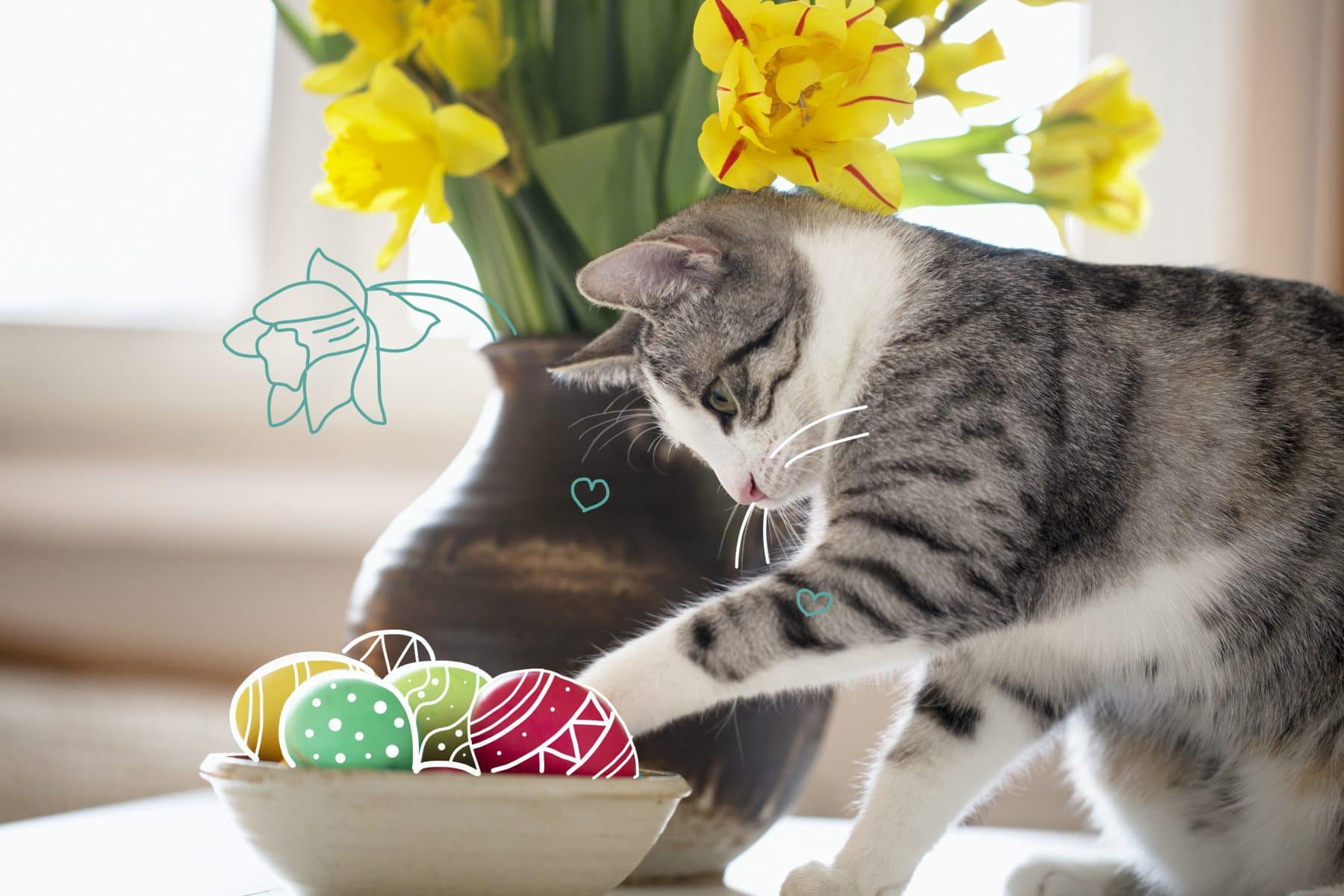 Easter pet treats - a cat with some coloured Easter eggs. Easter treats for pets.
