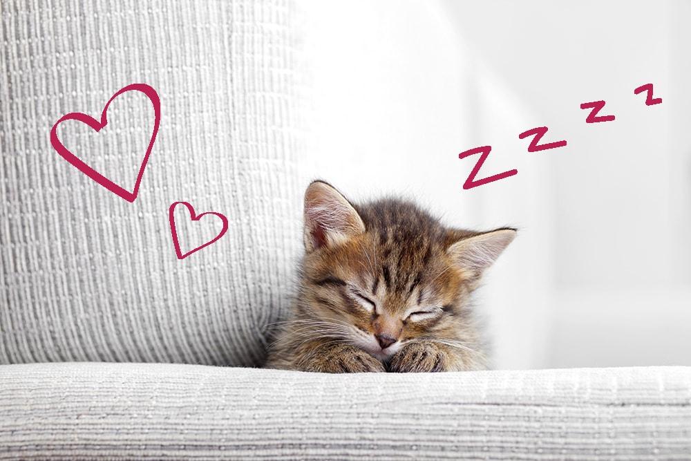 Cat names 2018 - a sleeping kitten