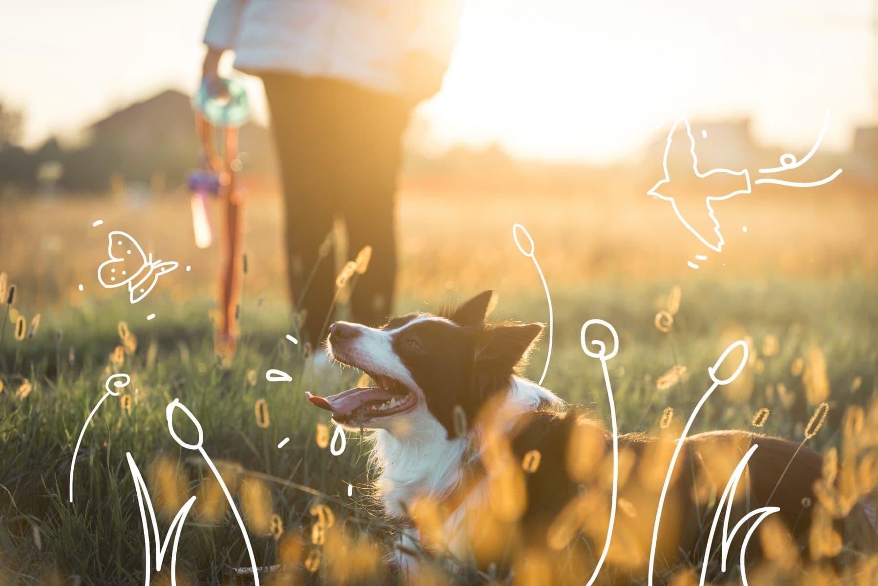 Dog dental health - a border collie