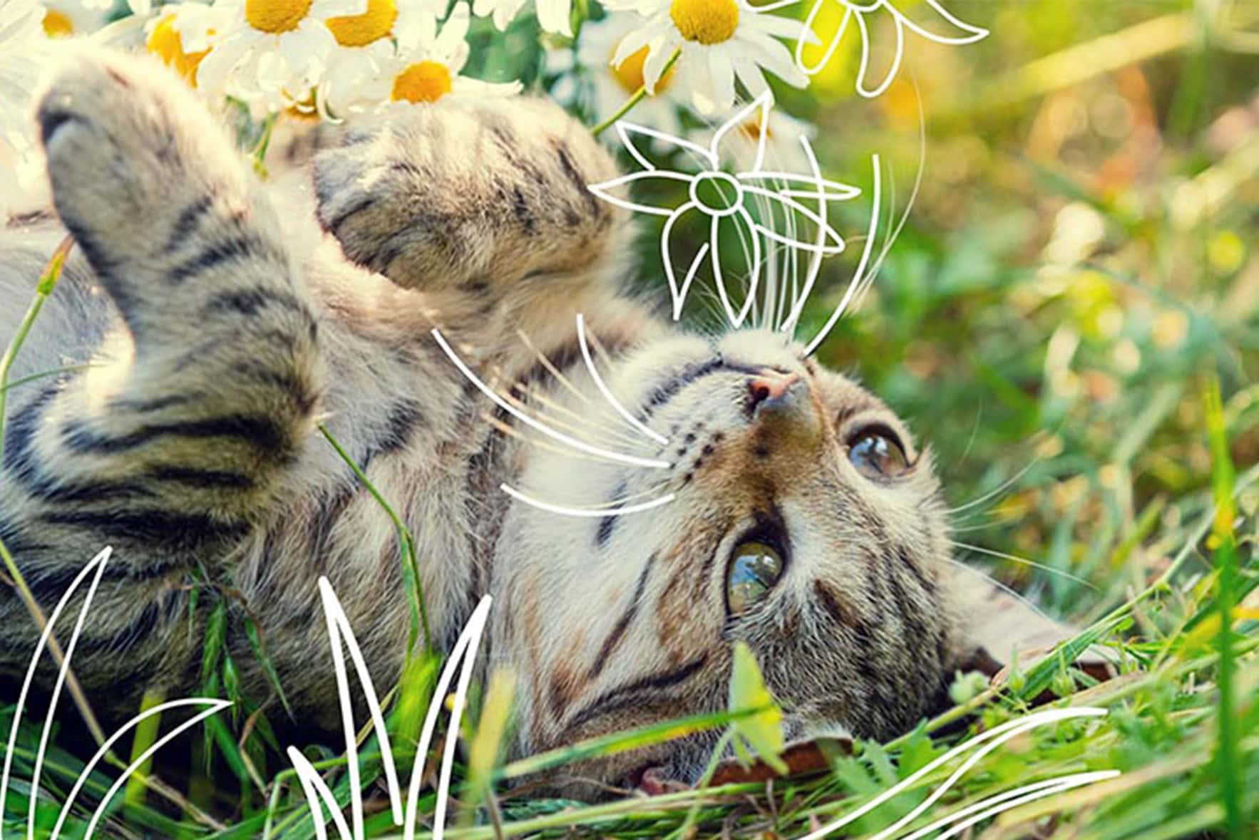 A cat lies in the grass - cat dental health products