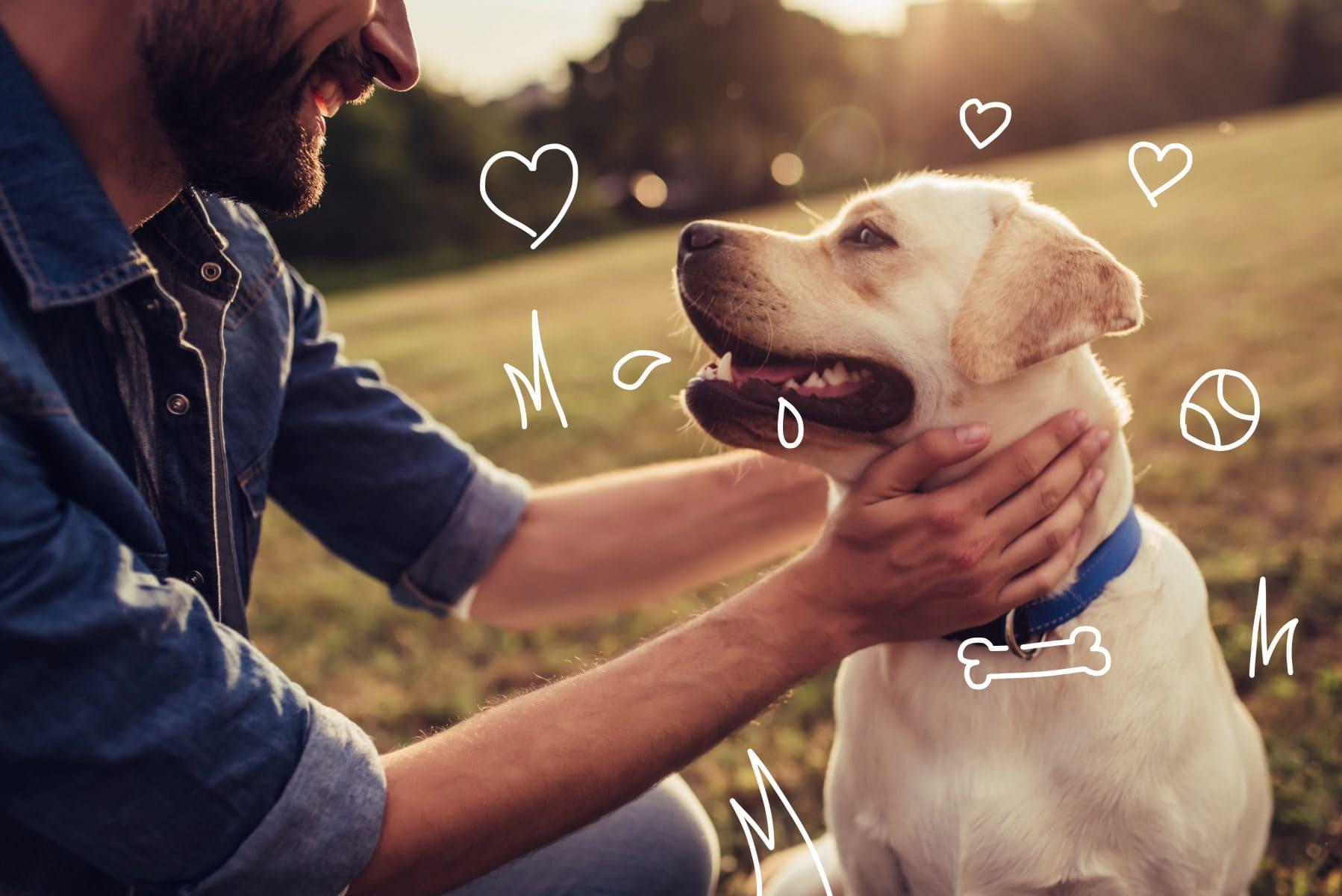 A man strokes a labrador - How to brush your dog's teeth