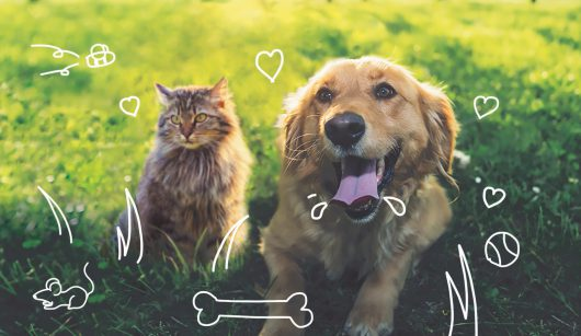 A guide to skin conditions in dogs and cats - cat and dog outdoors