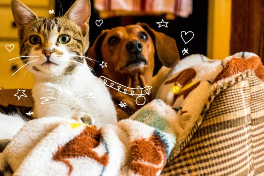 A cat and dog together on a sofa. Pet insurance form MiPet Cover.