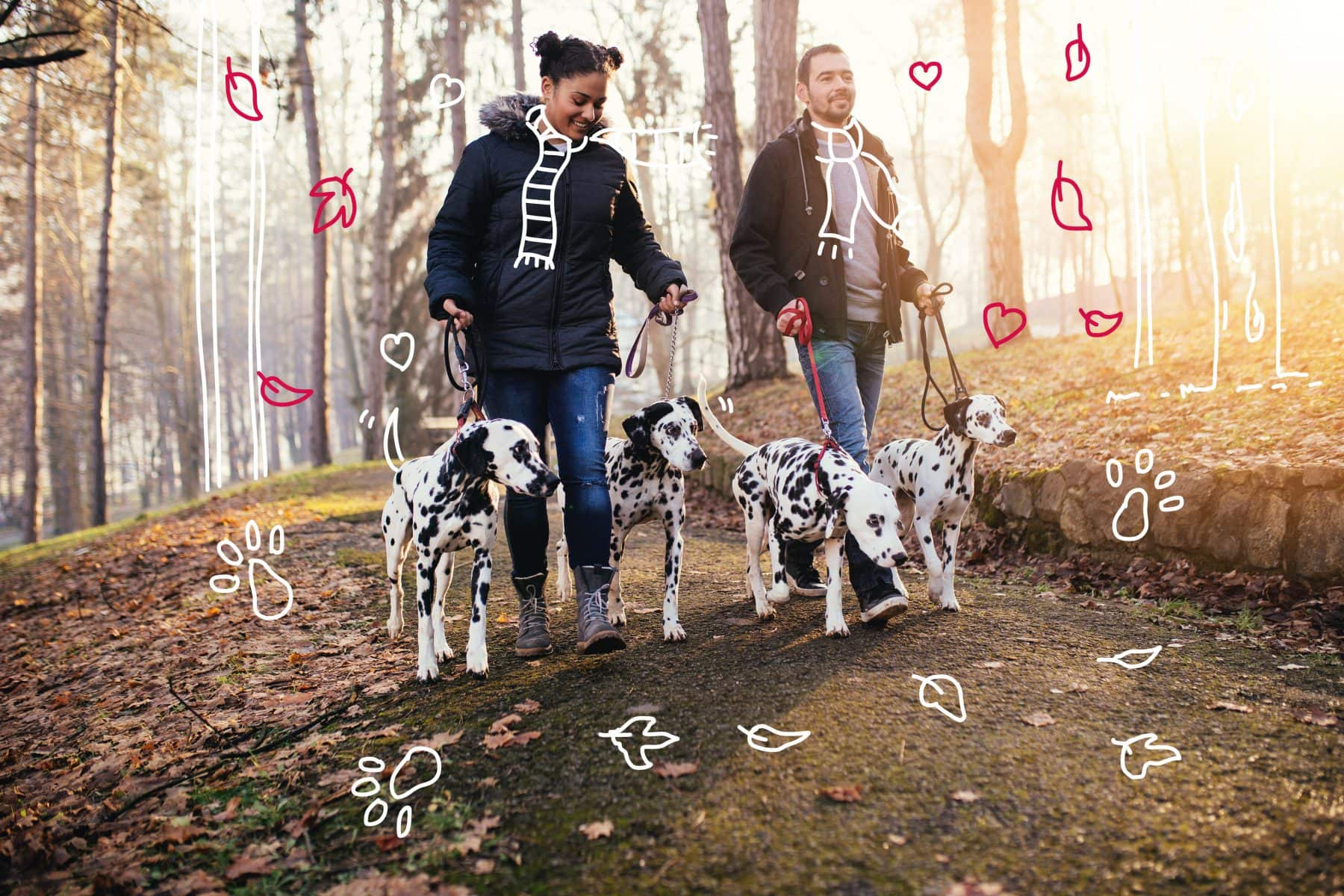 Dog walkers with Dalmatian dogs - How often should I walk my dog?