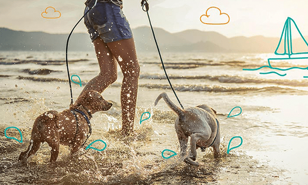 Keeping your dog cool - Dog insurance from MiPet Cover