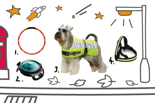Bee safe and be seen during dog walks