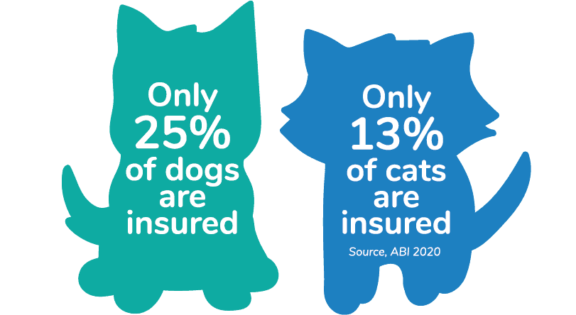 Only 25% of dogs and 13% of cats are insured - Pet insurance UK facts
