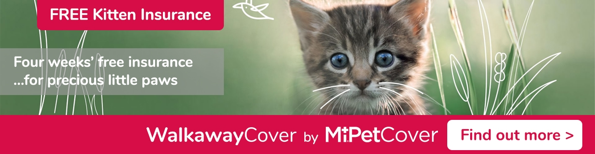 Kitten insurance - Find out more about MiPet Cover WalkawayCover