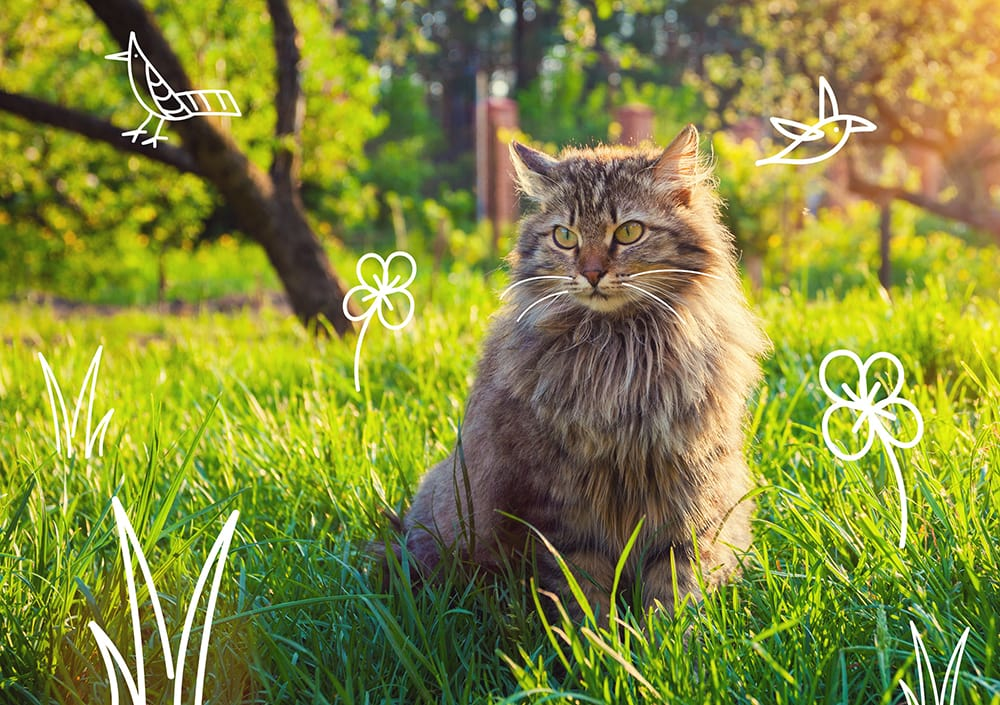 Why does my cat catch mice and birds? A cat sits outdoors in the grass