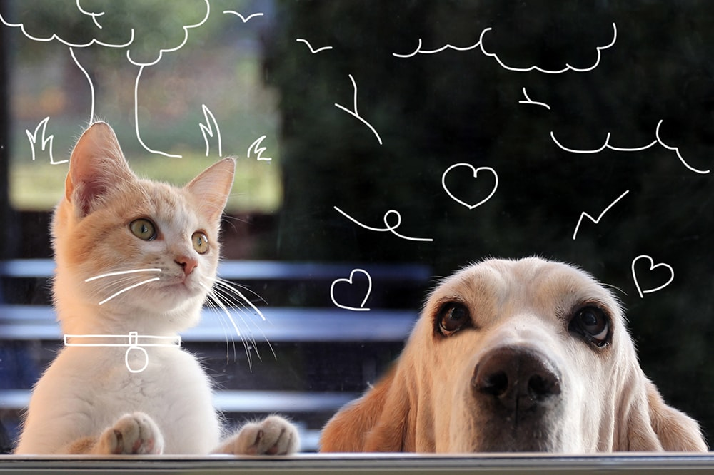 Basset hound and red kitten watching through the window. Does my pet have worms?