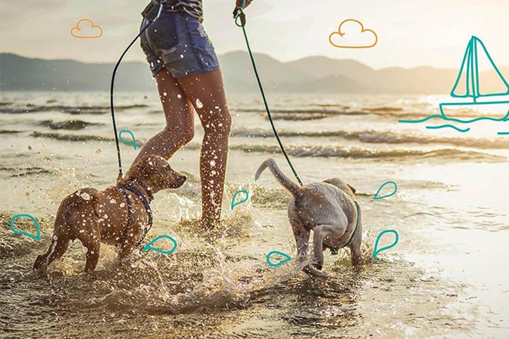 The UK's best dog friendly beaches