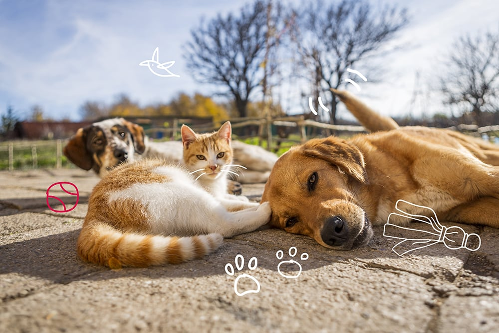 Cat and dog party! Ear problems in pets